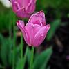 Flower_20090503_0001