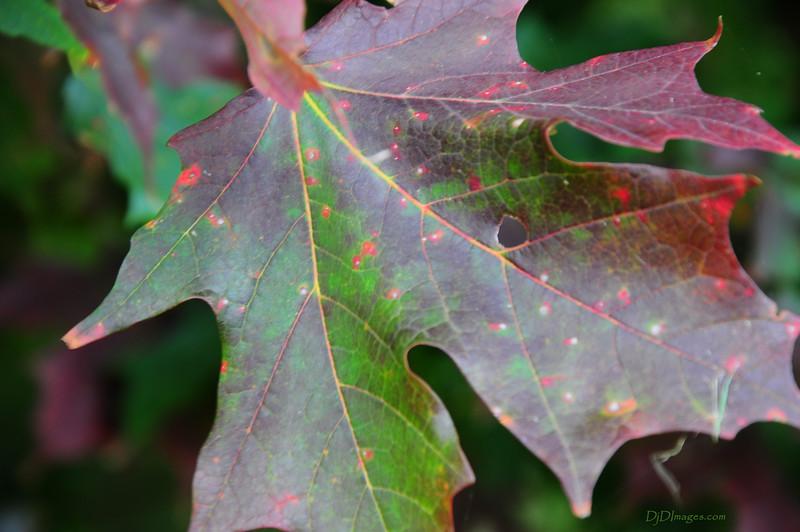 LeafFl_20090929_0129