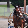 Horse_20090811_0031