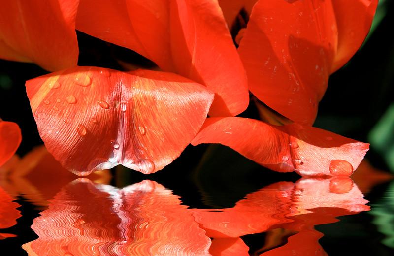 petals reflected.jpg