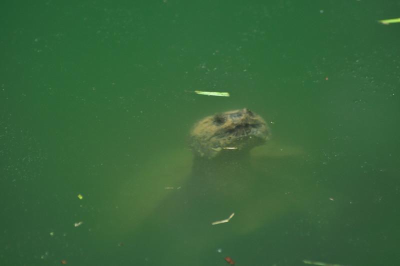 Turtle_20090806_0010