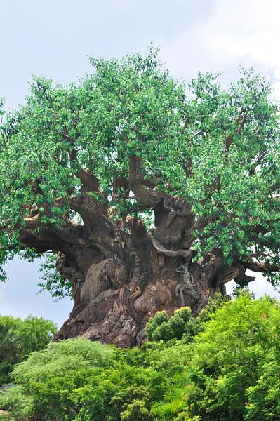 DisneyDay3__20090708_0807__