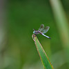 Dragonfly_20090814_0134