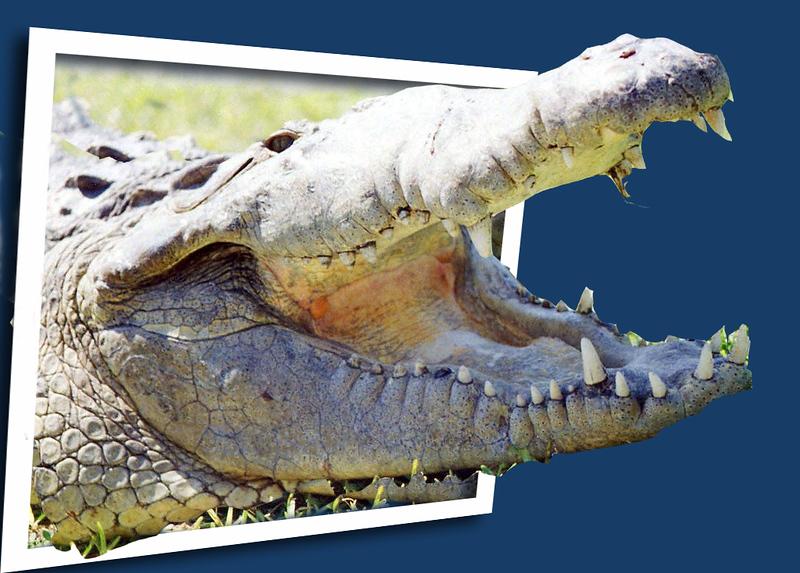 Croc fix copy.jpg