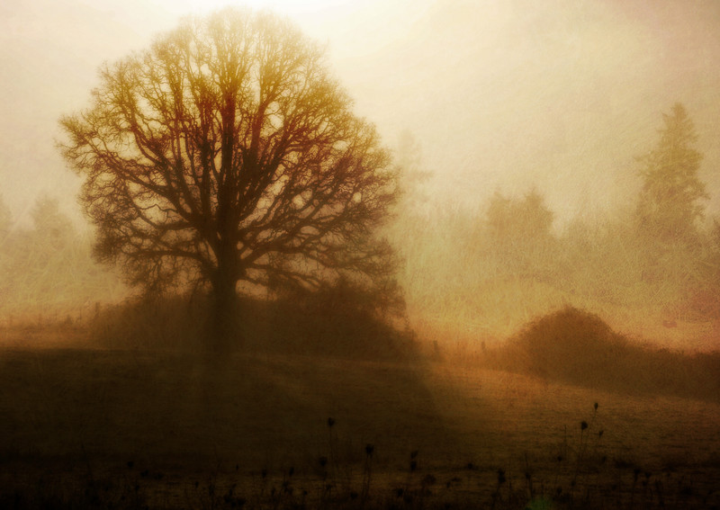 tree in the fog textured