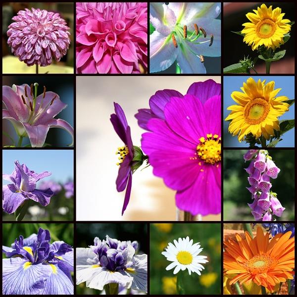 My Photo Garden