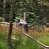 Heron_20090806_0007