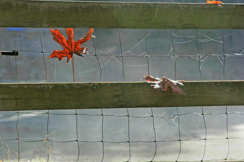 leaves in fence.jpg