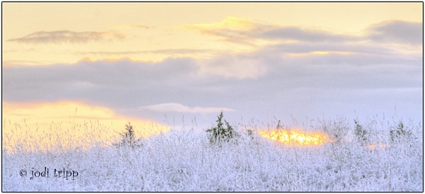 snow grass at sunrise
