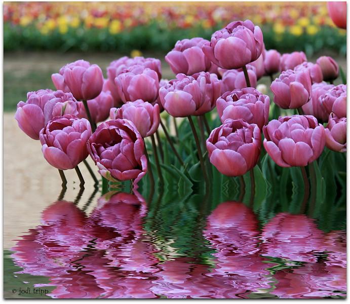 Spring flood (purple)