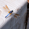 Dragonfly_20090823_0047