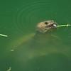 Turtle_20090806_0008