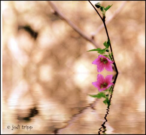 SMALL PINK FLOWER.jpg
