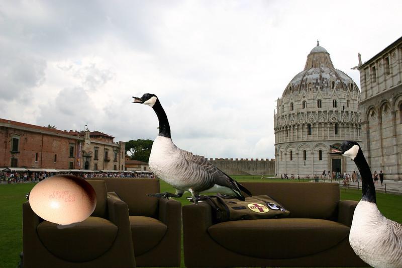 Geese at Pisa