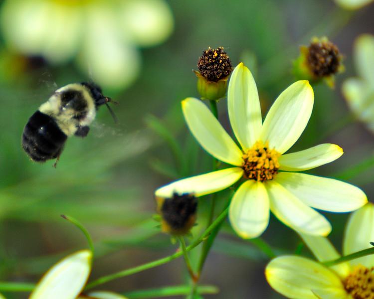 Bee_20090808_0064