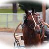 Horse Vignette