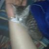 Kitten sleeping