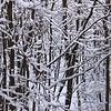 Snowday_0023adj