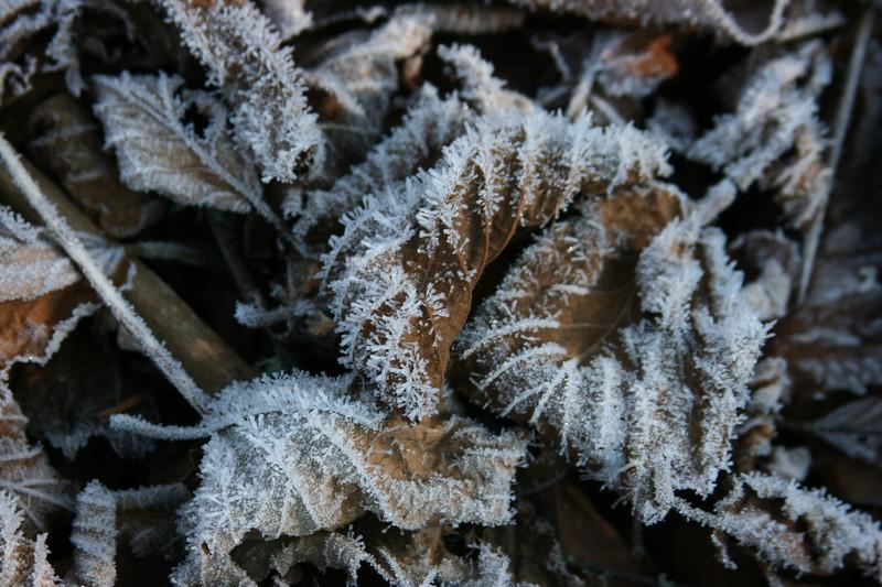 frosty leaves brown.jpg
