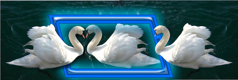 Swans in love.jpg