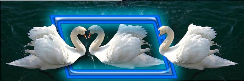 Swans in love.jpg
