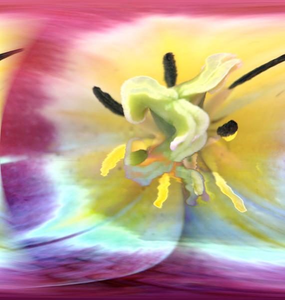 Inside a tulip