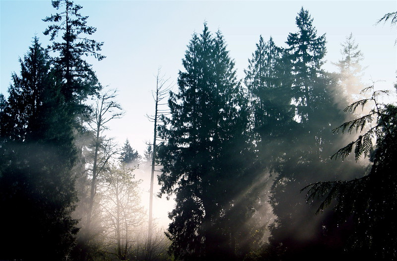mist through the trees