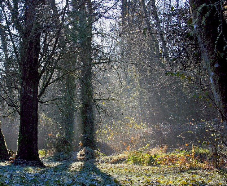 Frost morning in the forest