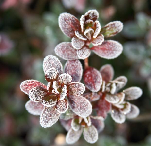 frosty morning 29