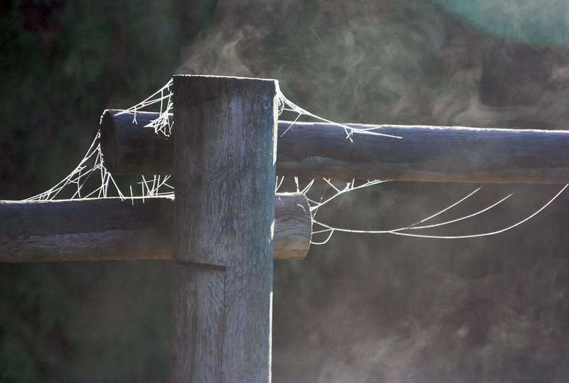 fog & spiderweb.jpg