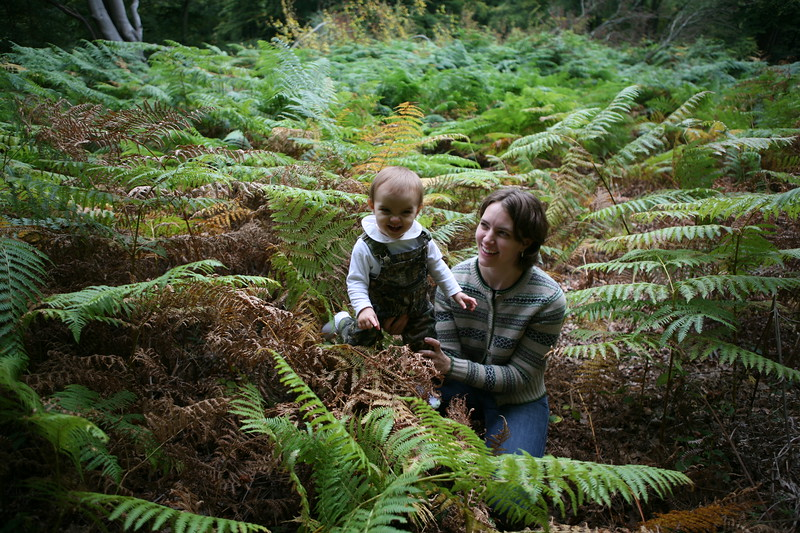 in among the ferns