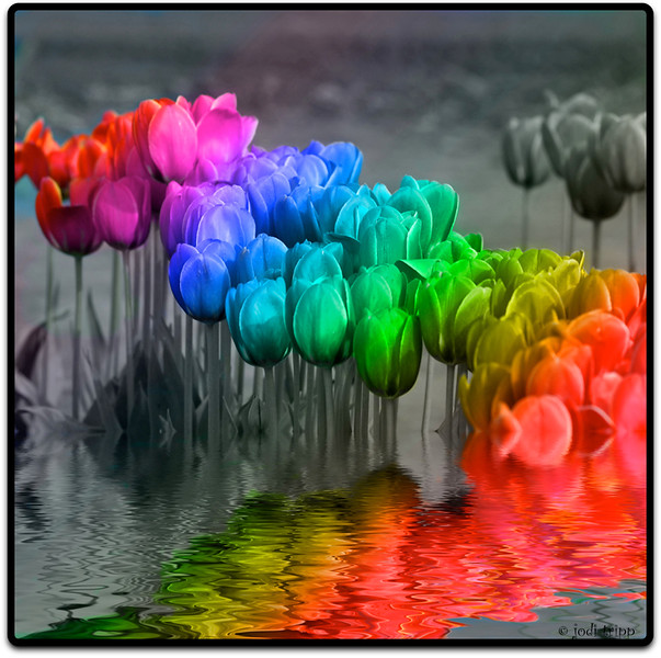 Rainbow Tulips flooded.jpg