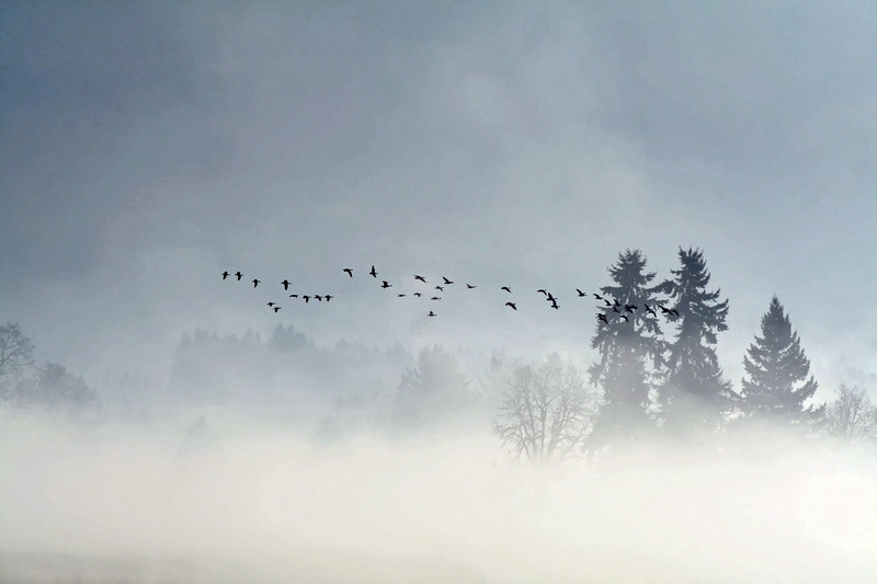 ducks above the fog