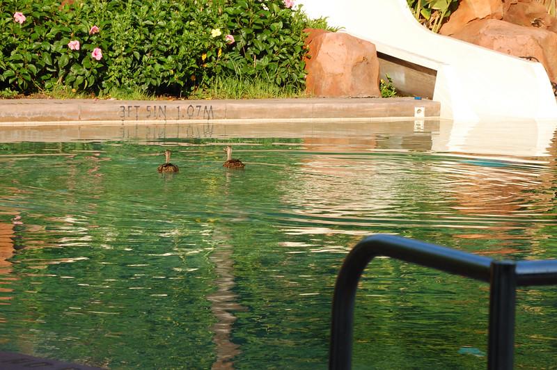 DisneyDay3__20090708_0929__