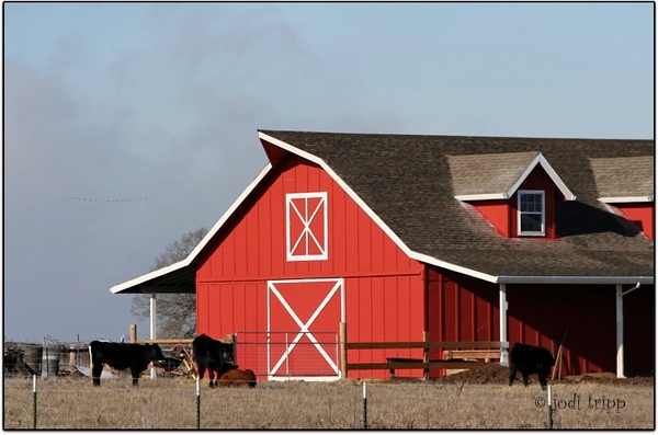 Big Red Barn with cows