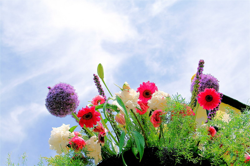 float flowers