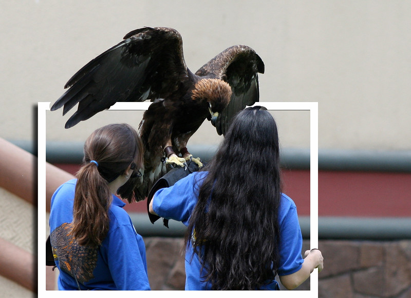 eagle escape