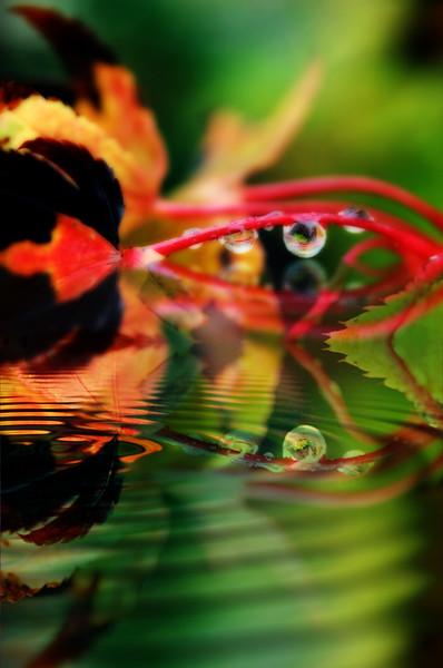 fall drops reflected.jpg