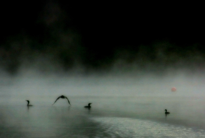 duck flight-fight
