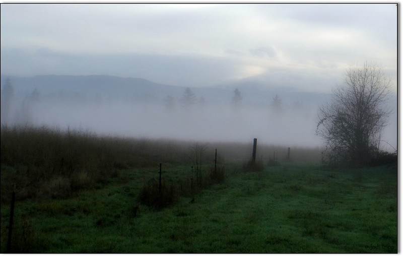 Misty rural morning