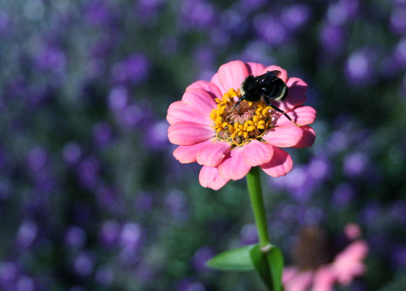 "My Macro ""Bee"" photo"