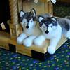 DisneyDay5__20090710_0588__0069