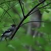 Bird_20090819_0038