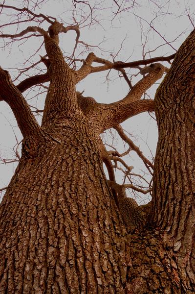 Tree2_color