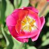 Flower_20090425_0006