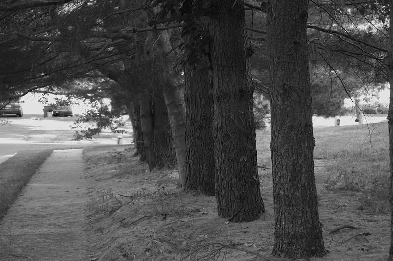 Trees20080617_001
