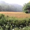 PasturePanorama