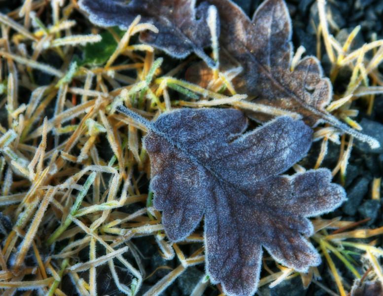 frosty morninG ORTON.jpg