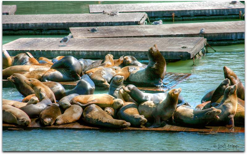 sea lions hdr.jpg