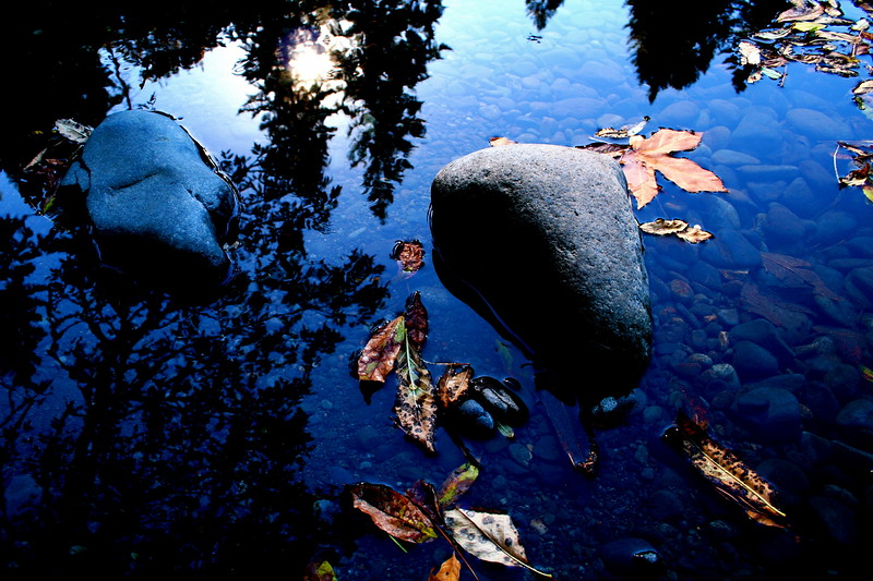 fallen leaves in reflected water